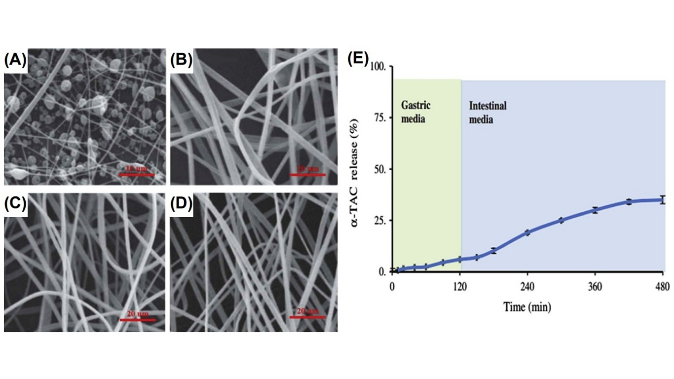Scanning electron microscopy images of (A) fibers prepared with 0.375 g/mL dextran under a voltage of 14 kV, flow rate of 1 mL/h, and distance of 15 cm at 25C; (B) vitamin E-loaded dextran nanofibers prepared with 1 g/mL dextran solution under 15 kV of voltage; (C) vitamin E-loaded dextran nanofibers prepared with 1.25 g/mL dextran under 13 kV of voltage; and (D) vitamin E-loaded dextran nanofibers prepared with 1 g/mL dextran solution under 13 kV of voltage. (E) The release profile of vitamin E (a-TAC) from dextran nanofibers in gastrointestinal media