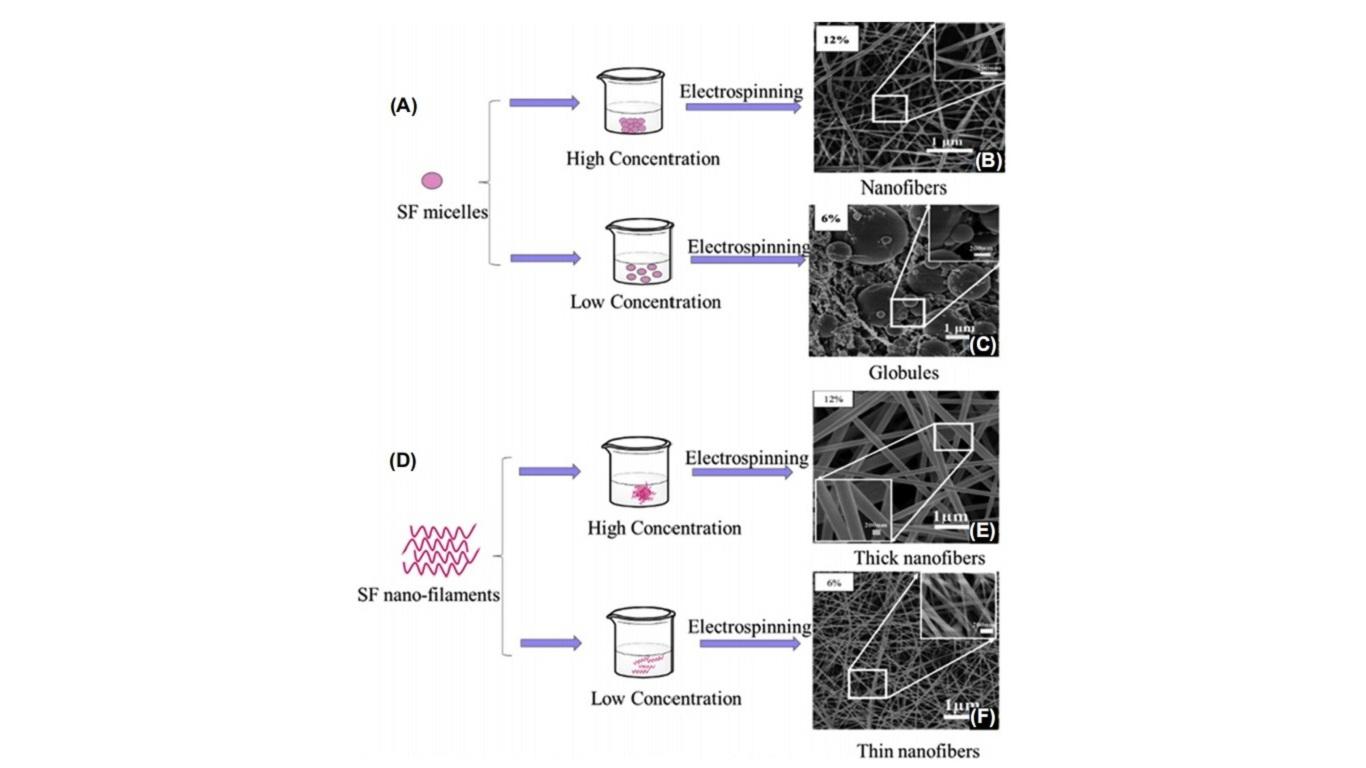 Model of electrospun silk fibroin (SF) nanosphere formation.